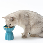 피단 고양이 세라믹 식기 그린 사진