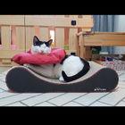 오케이펫코리아 고양이 스크래쳐 Pillow 사진