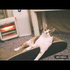 오케이펫코리아 고양이 스크래쳐 700R 사진
